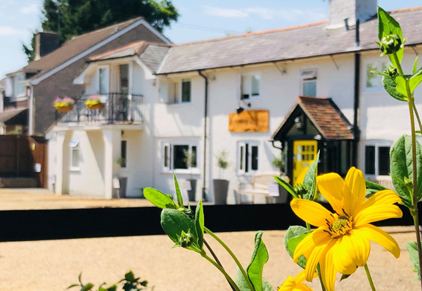 Dog Friendly Pubs With Accommodation In New Forest