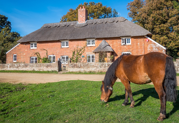Horse b b horse accommodation holidays with your horse - Hotels in brockenhurst with swimming pools ...