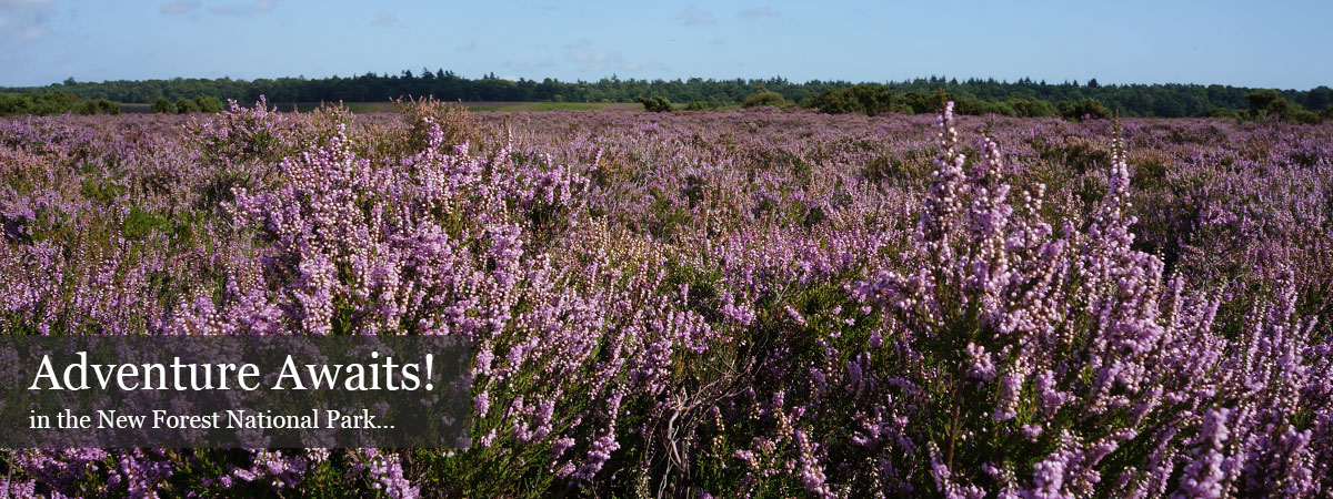 Hotels Near Ringwood New Forest